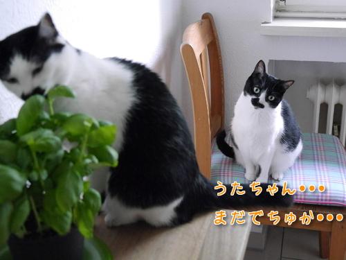 ドイツ 猫 バジル