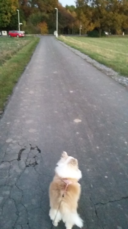 ドイツ 犬 散歩