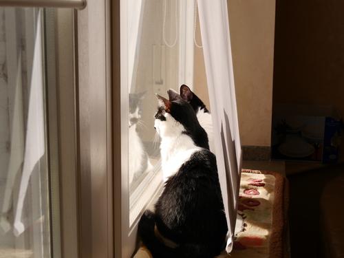 ドイツ  猫 日向