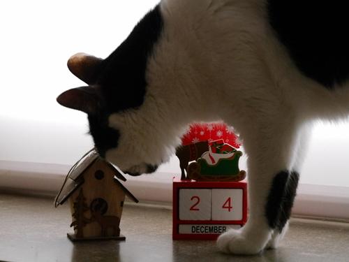 12月 メリークリスマス~♪
