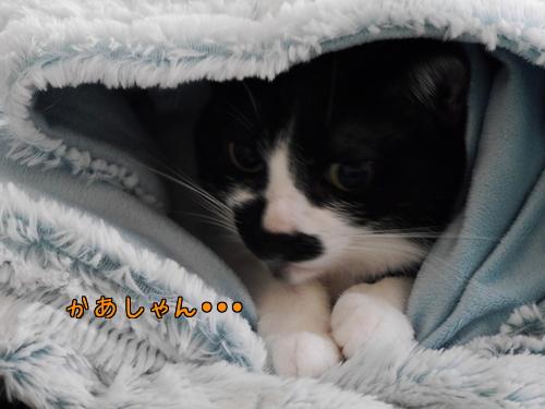12月 風邪ブログお休みでちゅ~♪1