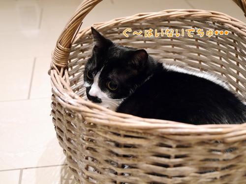 ドイツ 猫