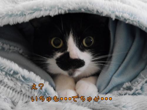 12月 風邪ブログお休みでちゅ~♪