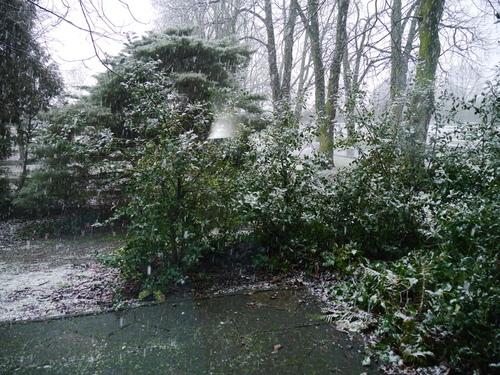 1月14日 雪降り始め~♪