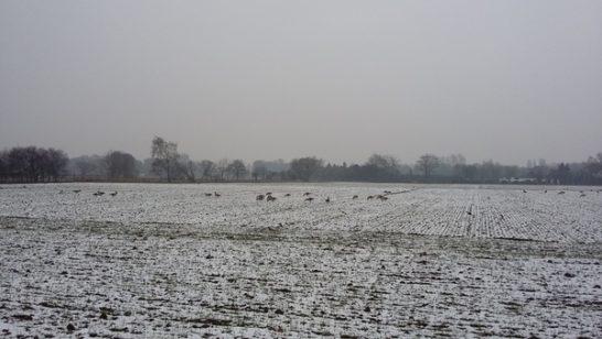 2月 雪の後の畑で~♪