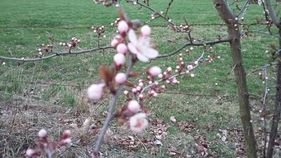 3月 ドイツ 春 花