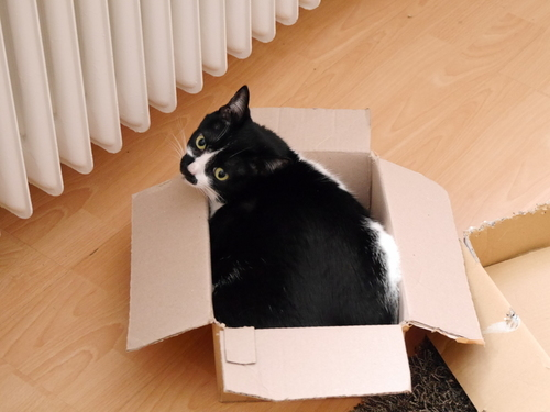 3月 ドイツ 春 猫 暖房