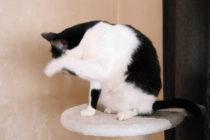 3月 ドイツ 猫 アレルギー 花粉症