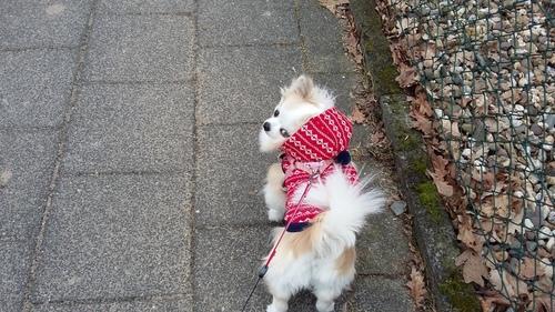 3月 ドイツ 犬 散歩