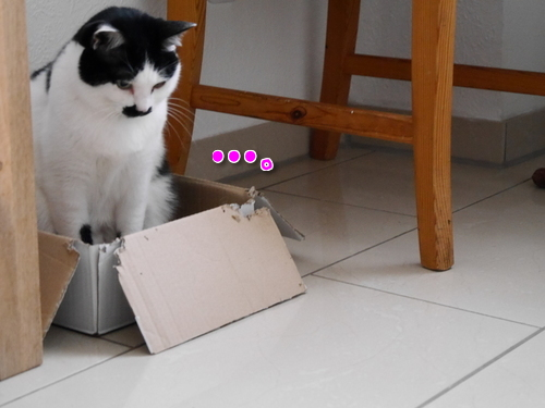 2月 ドイツ 胡桃 猫