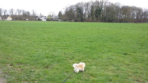 3月 ドイツ 馬 散歩 犬