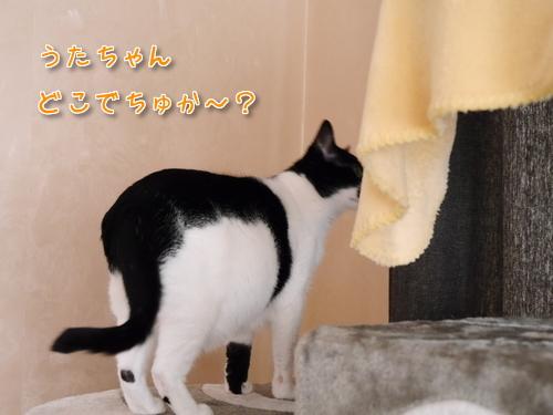 ドイツ 猫 かくれんぼ 遊ぶ