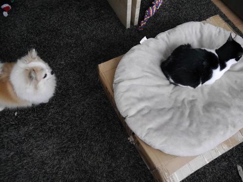 3月 ドイツ 犬 猫