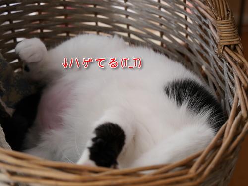 3月 ドイツ 猫 ダイエット