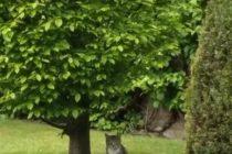 4月 ドイツ 猫