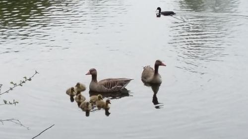 4月 ドイツ 水鳥
