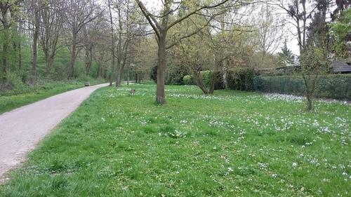 4月 ドイツ 散歩道