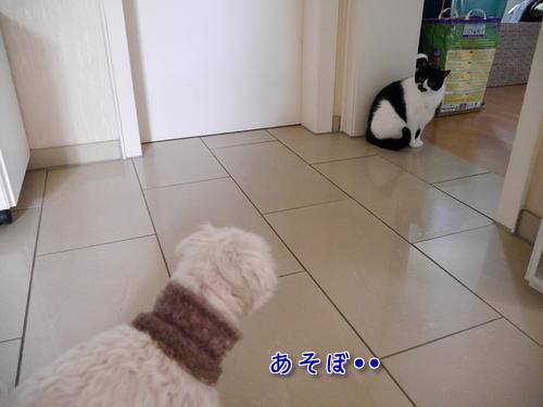 4月 ドイツ 猫 犬