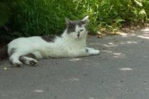 5月 ドイツ 出会った猫