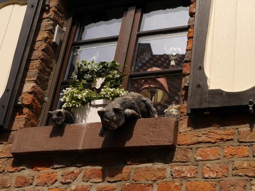 5月 ドイツ 猫 オブジェ