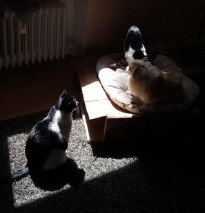 5月 ドイツ 猫 犬