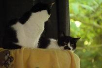 6月 ドイツ 猫 猫団子