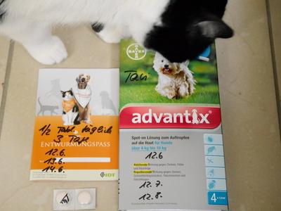 6月 ドイツ 猫、犬ノミ、ダニ薬 動物病院