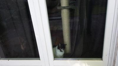 6月 ドイツ 困った猫