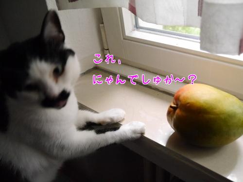 6月 どいつ 猫 果物