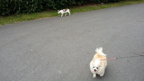6月 ドイツ 猫くん 犬
