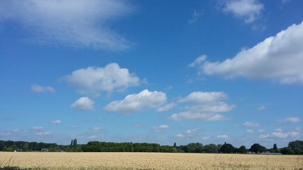 7月 ドイツ 麦畑