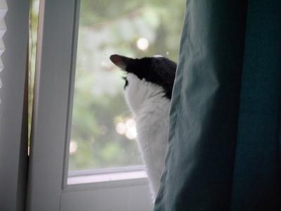 7月 ドイツ 猫くん