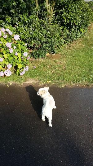 7月 ドイツ 犬