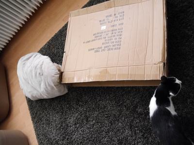 2017.8 ドイツ 犬 猫