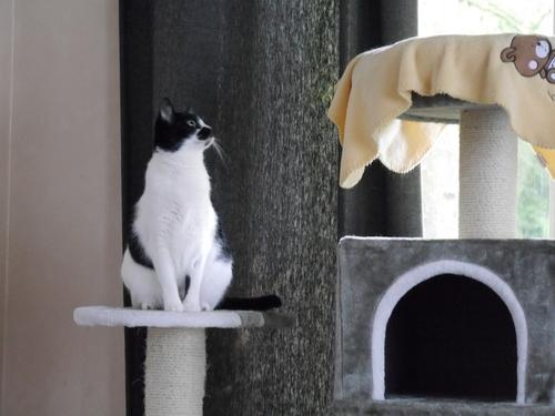 2017.8 ドイツ 猫 ぐる