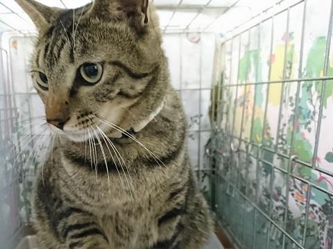 2017 日本 猫