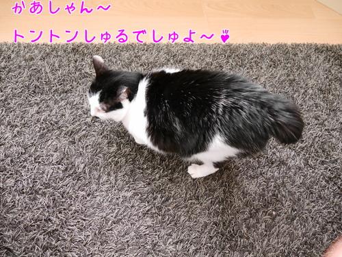 2017 ドイツ 猫