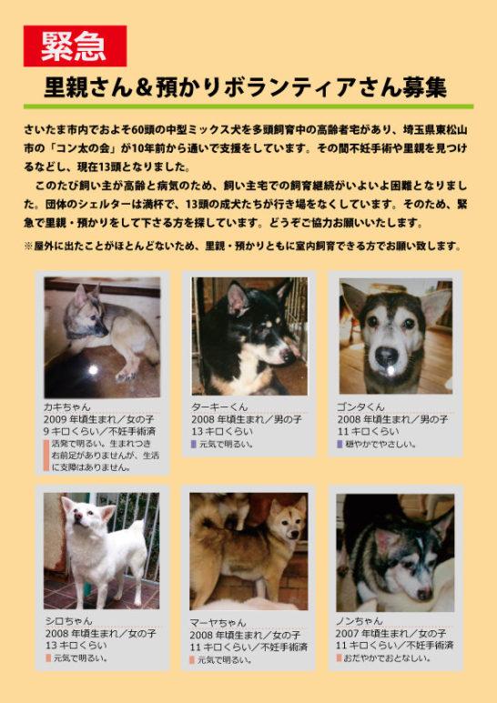 2018 日本 犬