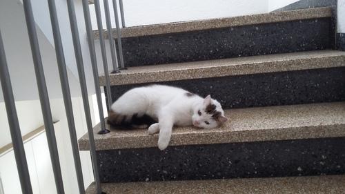 2018 ドイツ 猫
