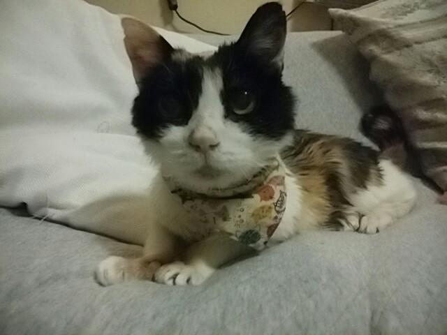 2018 日本 猫