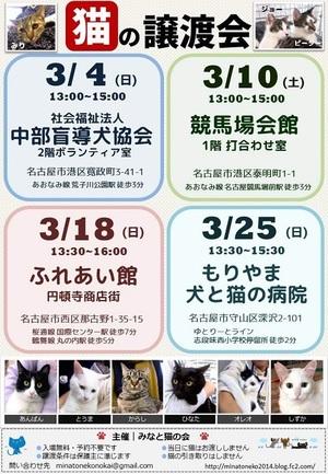 2019 日本 猫