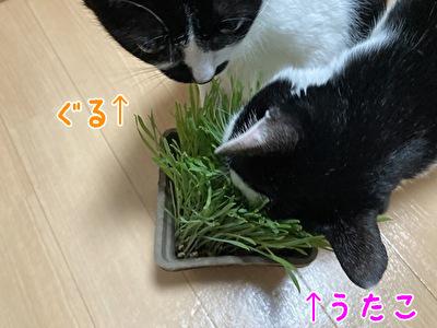 2021 日本 娘たち